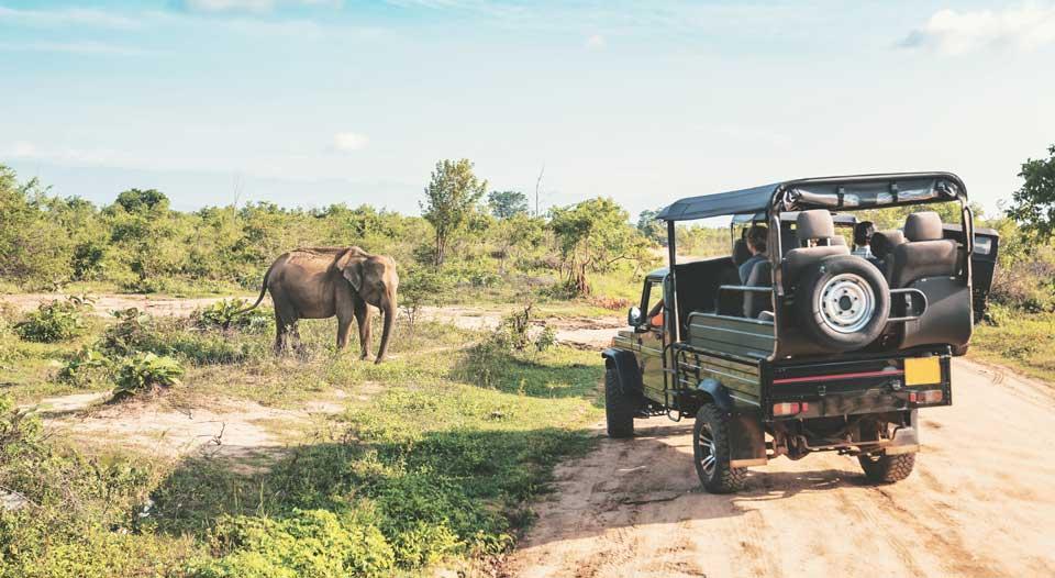 Scène de safari avec jeep et éléphant sauvage