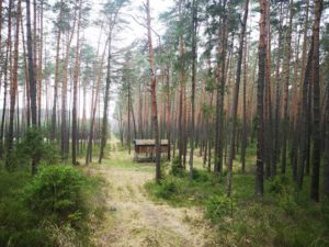 3. wooden cabana in the woods