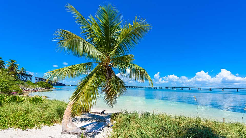 Palm tree on a beach in the Florida Keys